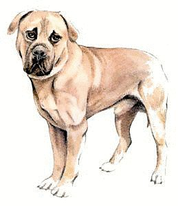 Mastiff clipart #15, Download drawings
