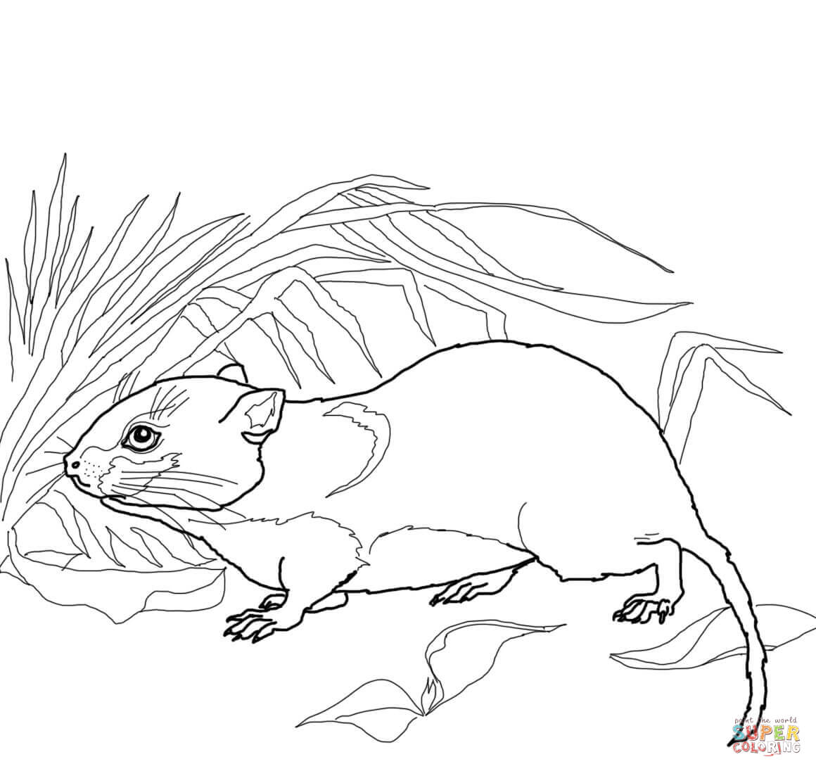 Vole coloring #5, Download drawings