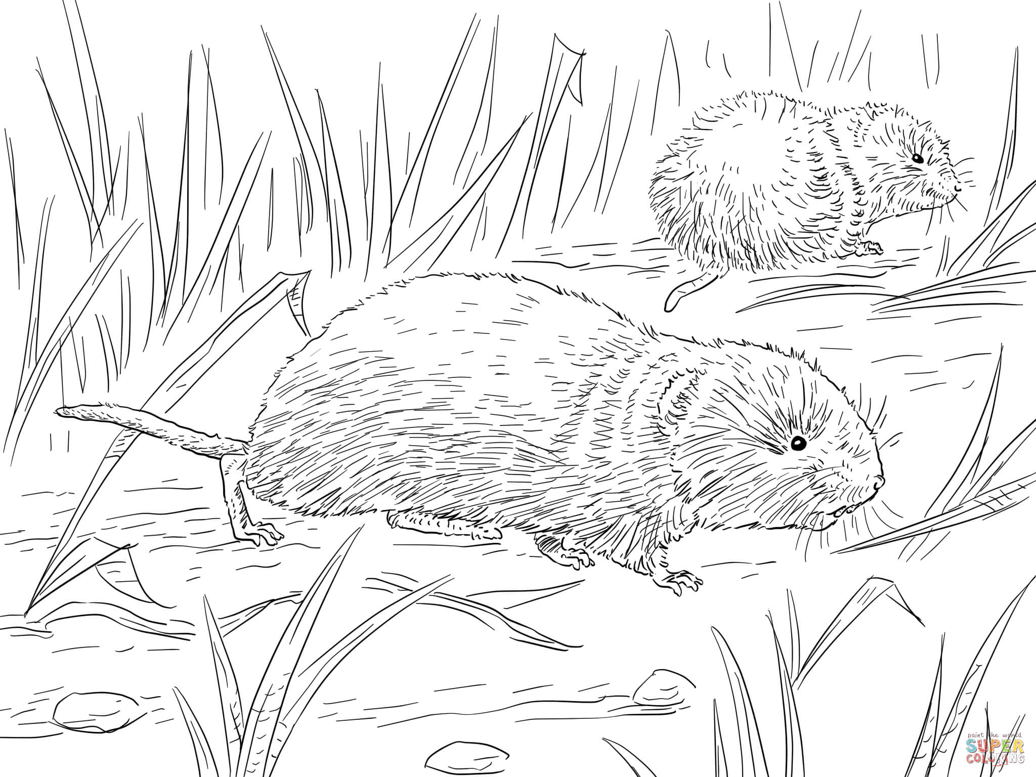 Vole coloring #15, Download drawings