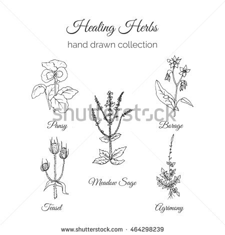 Meadow Sage clipart #10, Download drawings