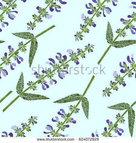 Meadow Sage clipart #11, Download drawings