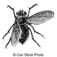 Meatfly clipart #14, Download drawings