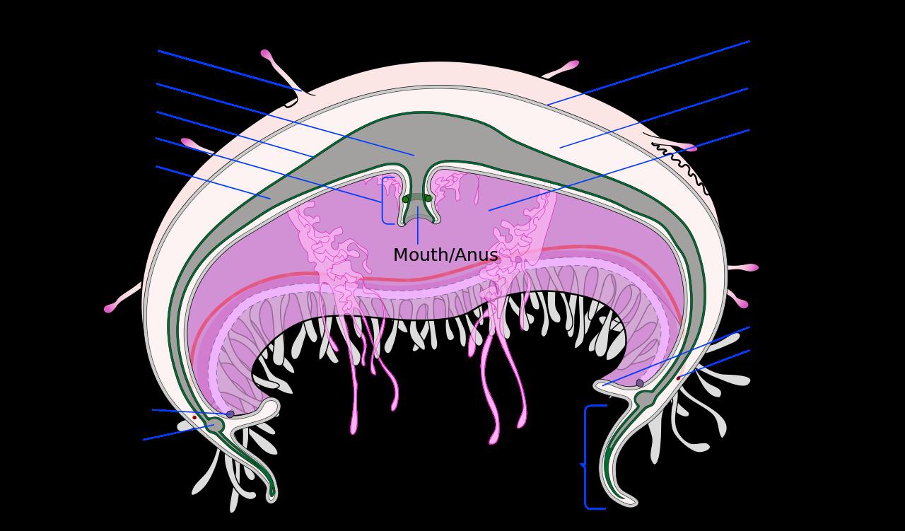Medusa svg #11, Download drawings