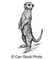Meerkat clipart #11, Download drawings