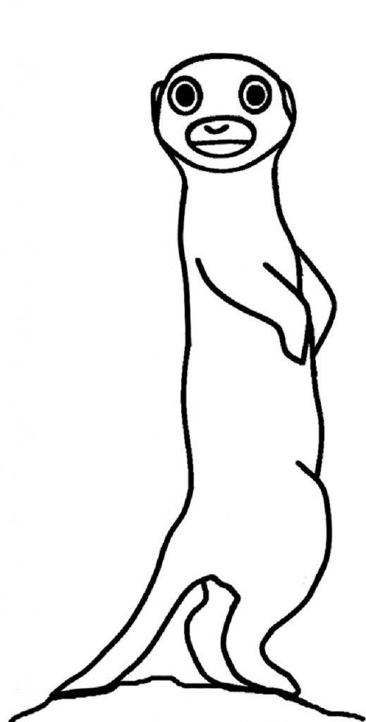 Meerkat coloring #5, Download drawings