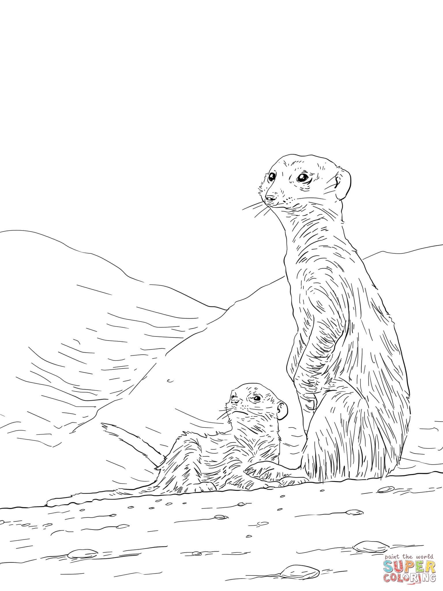 Meerkat coloring #2, Download drawings