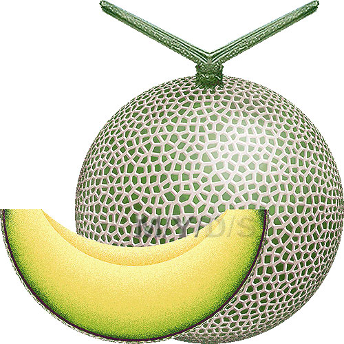 Melon clipart #6, Download drawings