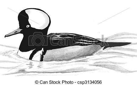 Merganser Duck clipart #6, Download drawings