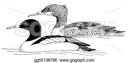 Merganser Duck clipart #7, Download drawings