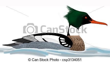 Merganser Duck clipart #16, Download drawings