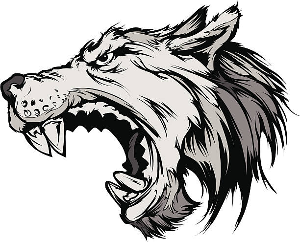 Mexican Gray Wolf clipart #10, Download drawings