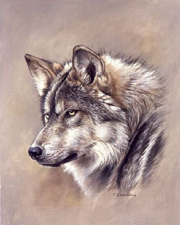 Mexican Gray Wolf clipart #8, Download drawings