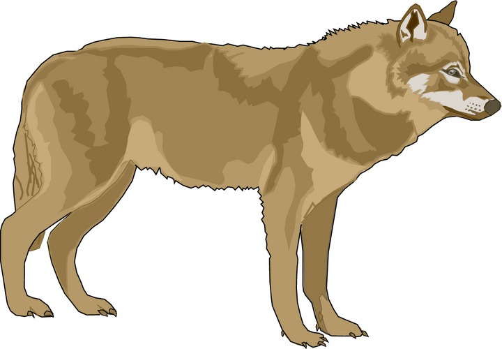 Mexican Gray Wolf clipart #7, Download drawings