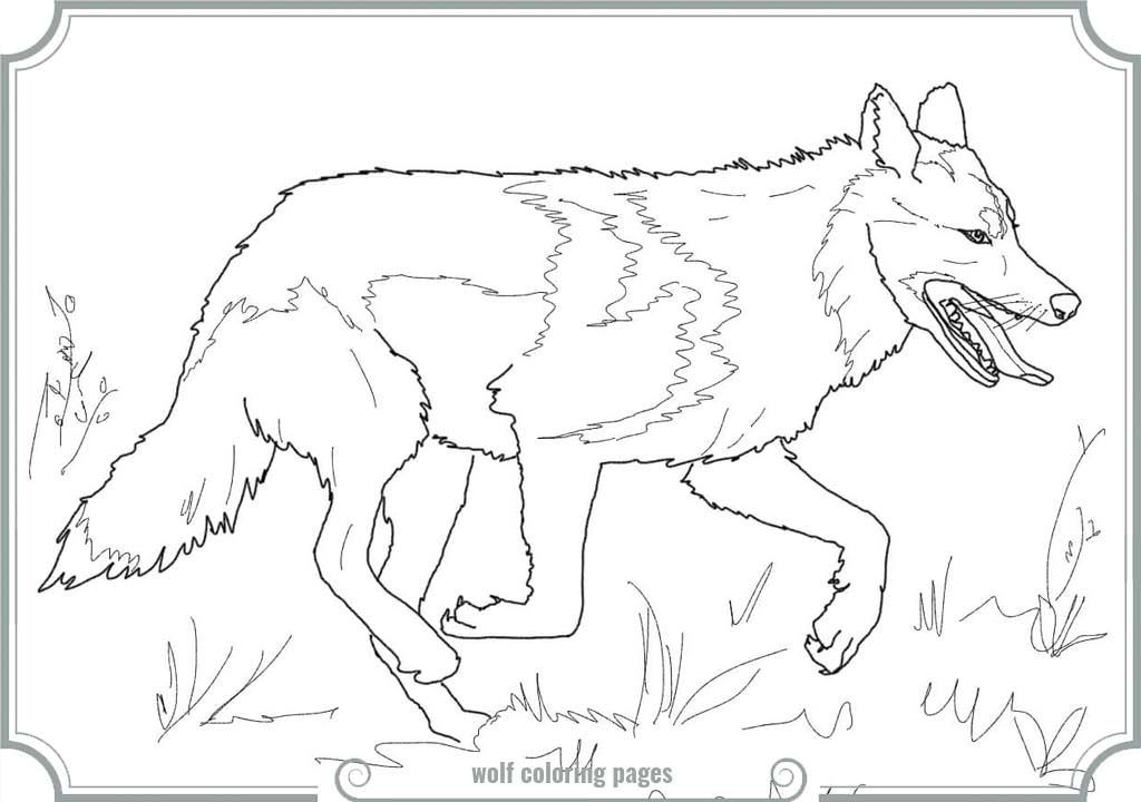 gray wolf coloring pages - photo#27