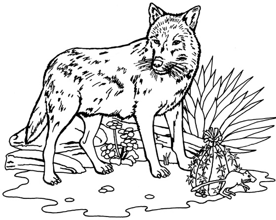 Download Mexican Gray Wolf coloring for free ...