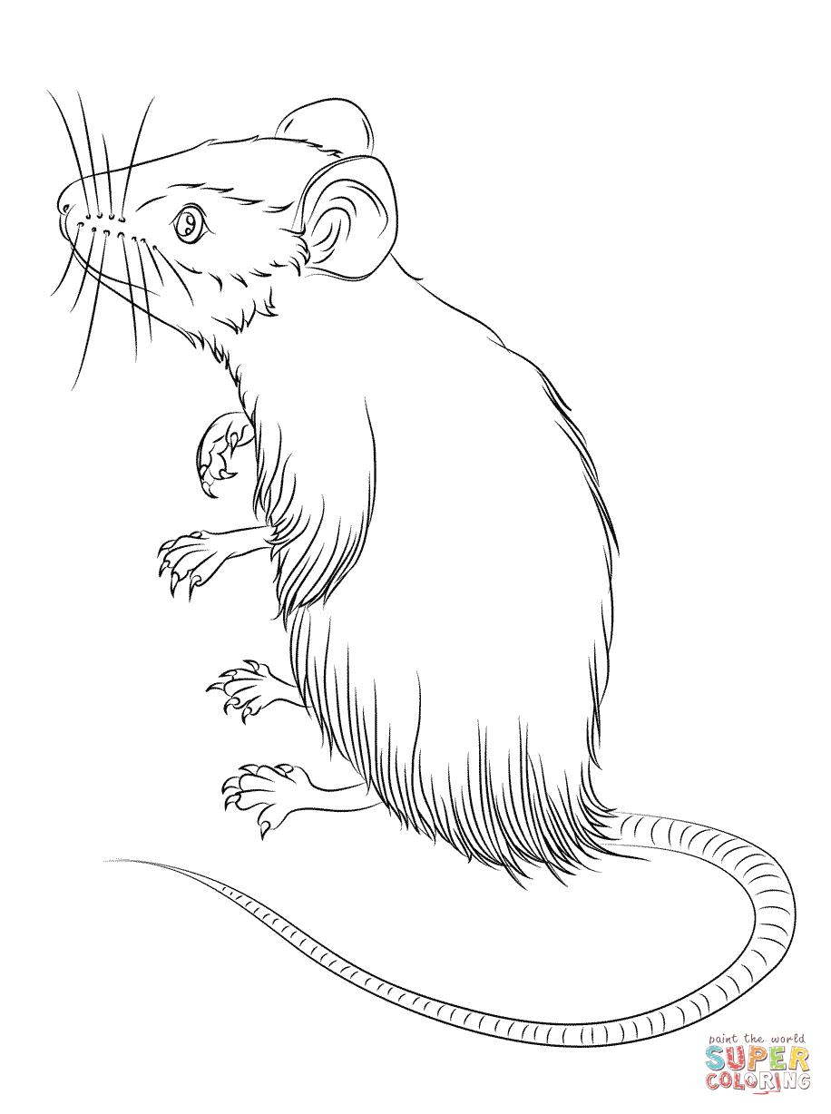 Mice coloring #2, Download drawings