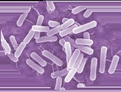 Microbe coloring #9, Download drawings
