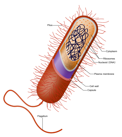 Microbe svg #1, Download drawings
