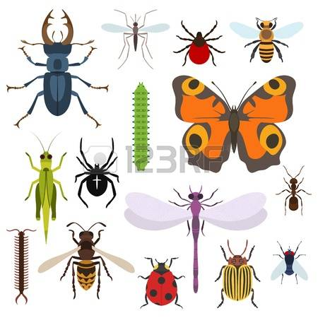 Midge clipart #5, Download drawings