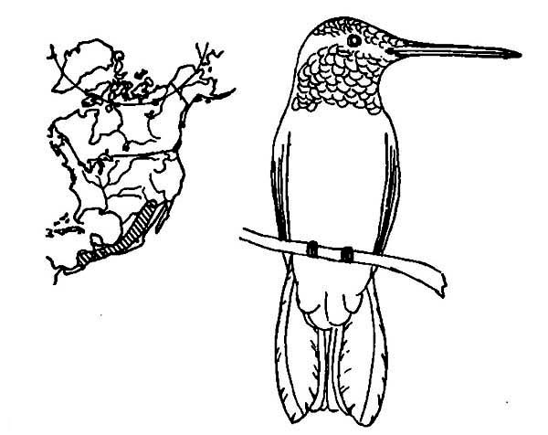 bird migration coloring pages - photo#22