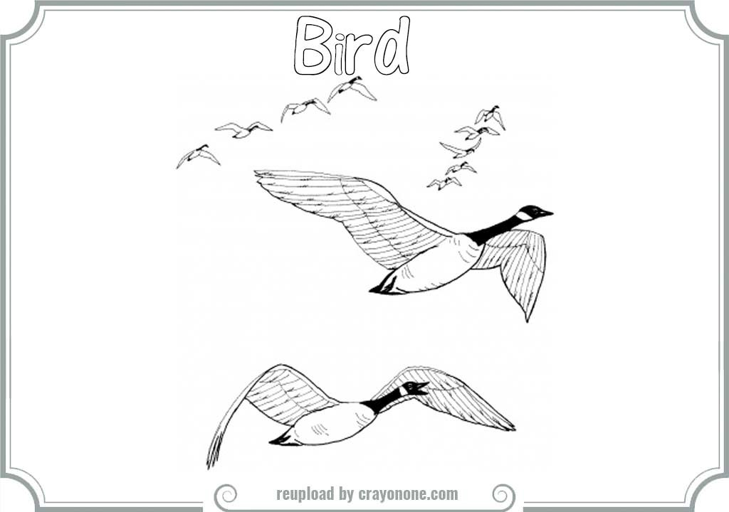 bird migration coloring pages - photo#8