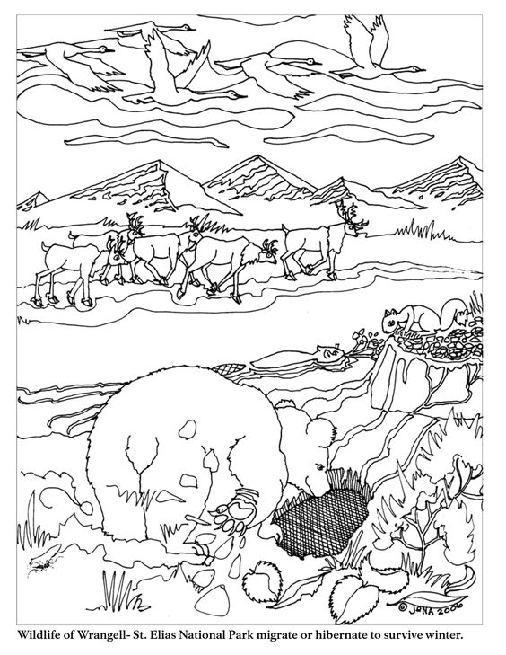 Migration coloring #12, Download drawings