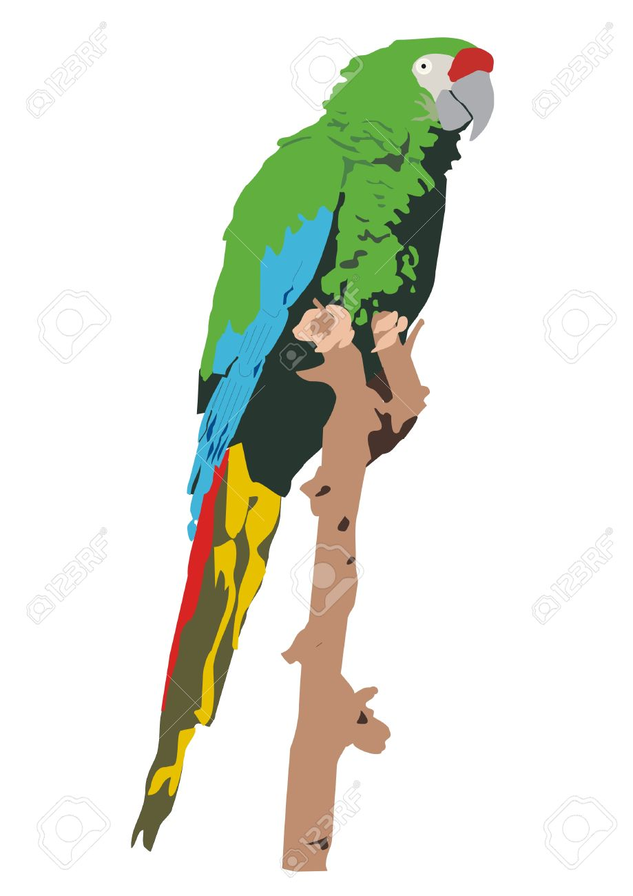 Military Macaw clipart #2, Download drawings