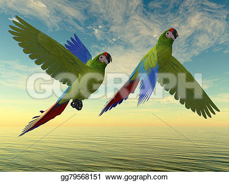 Military Macaw clipart #17, Download drawings