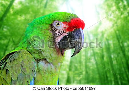 Military Macaw clipart #14, Download drawings