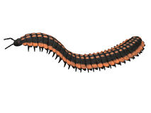 Millipede clipart #7, Download drawings