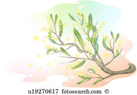 Mimosa clipart #11, Download drawings