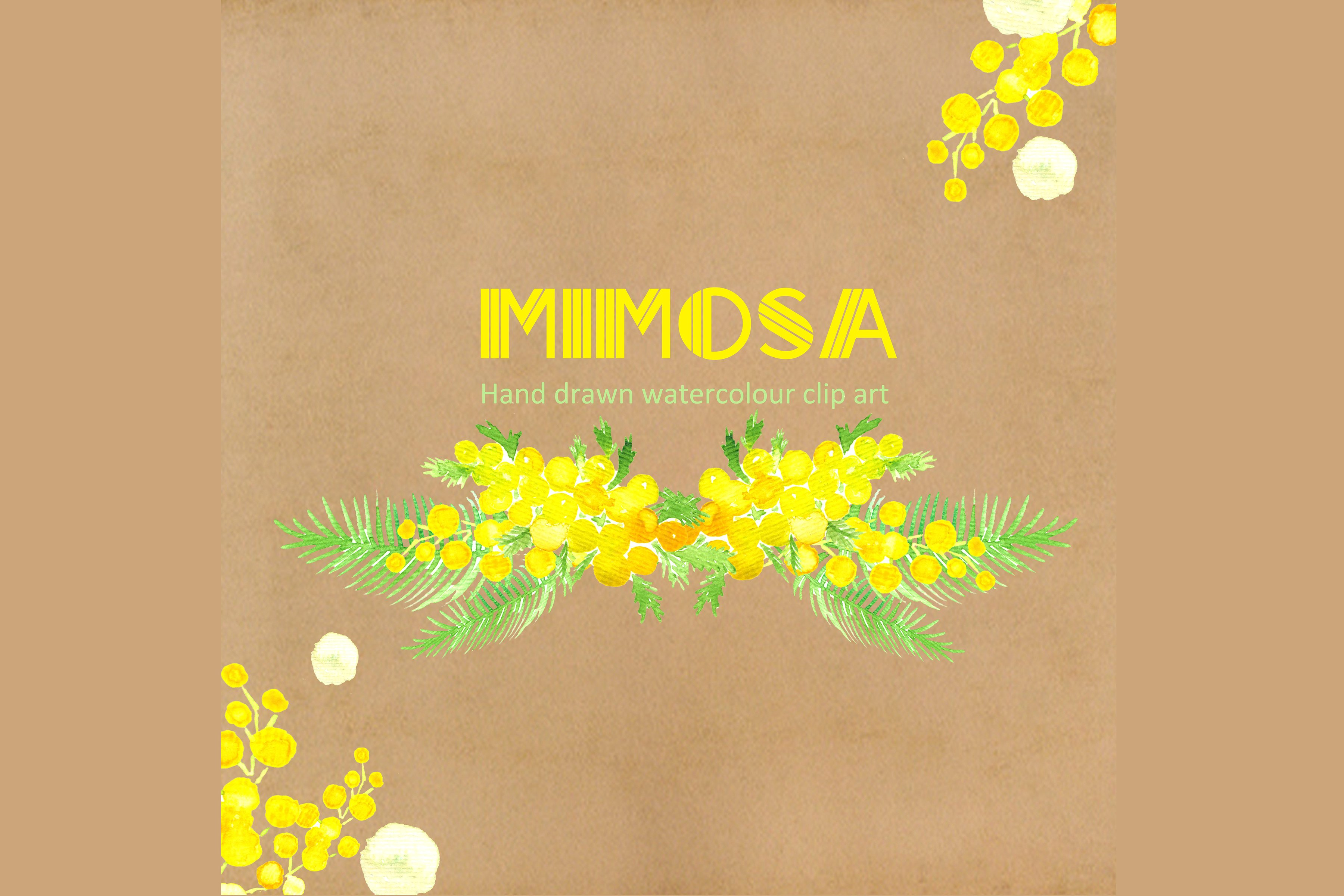 Mimosa clipart #3, Download drawings