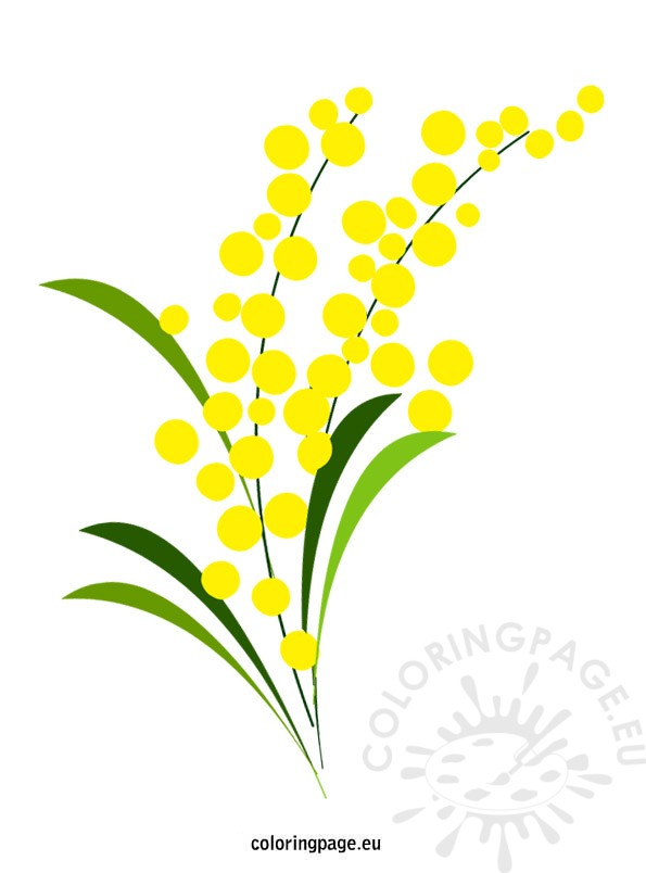 Mimosa clipart #1, Download drawings