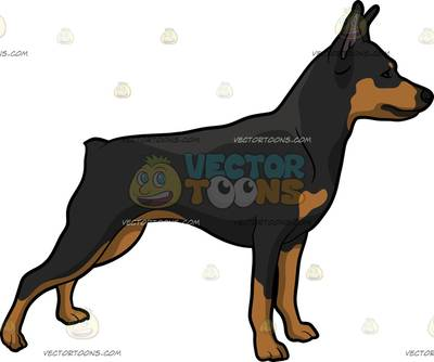 Miniature Pinscher clipart #9, Download drawings