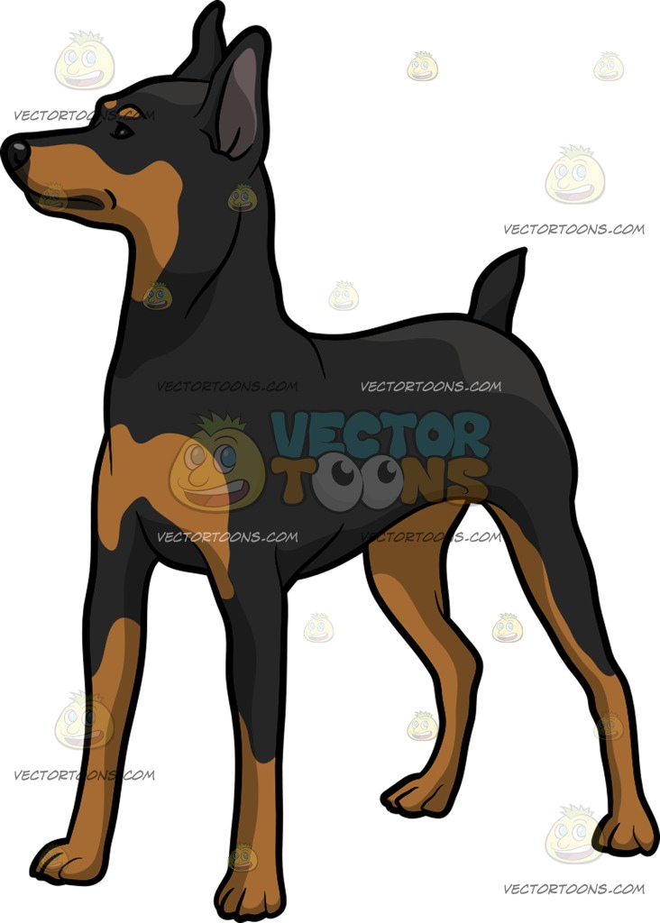 Miniature Pinscher clipart #4, Download drawings
