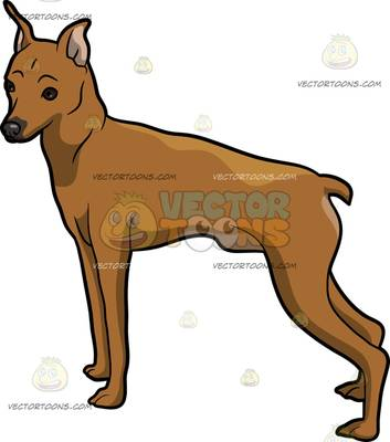 Miniature Pinscher clipart #14, Download drawings