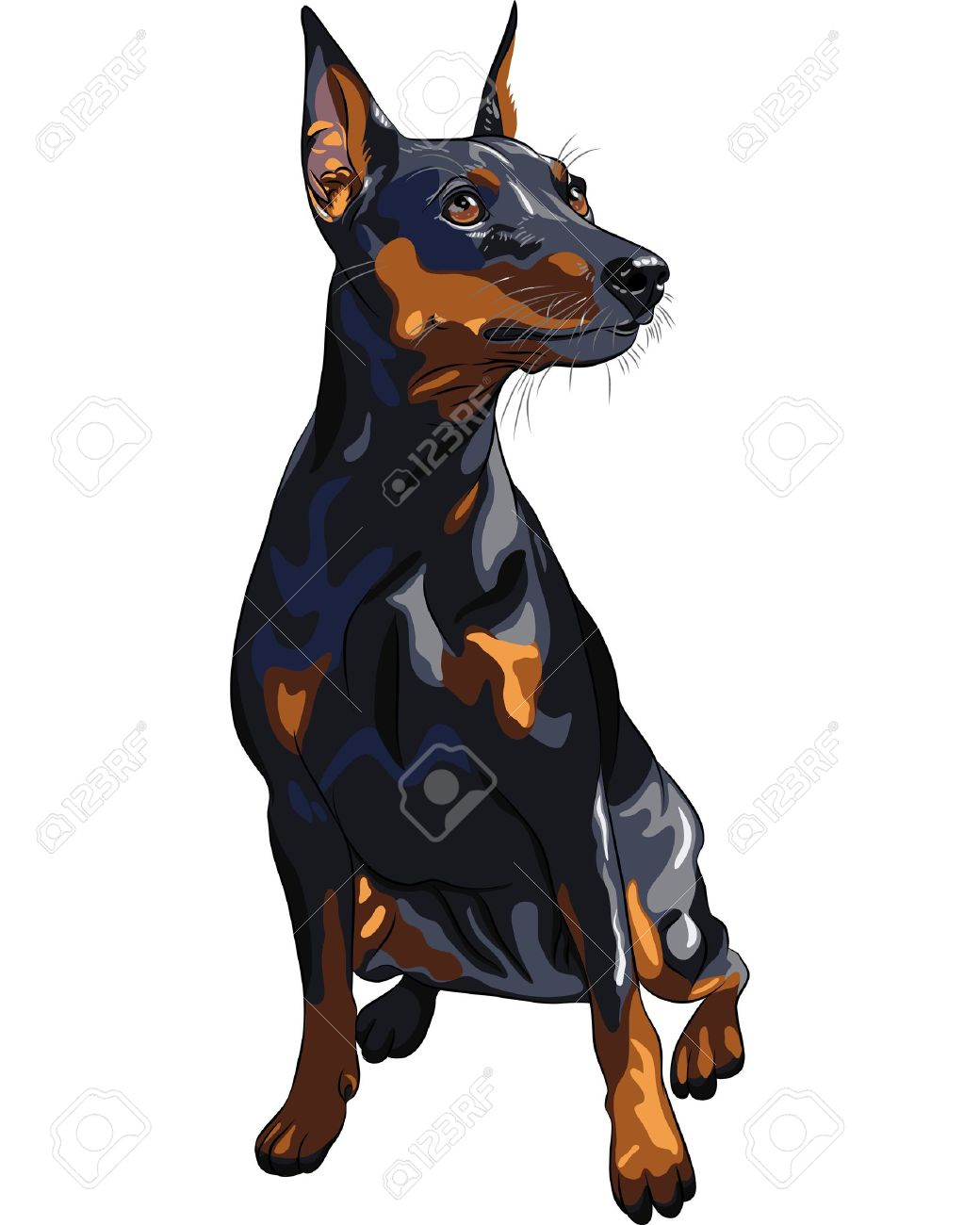 Miniature Pinscher clipart #6, Download drawings