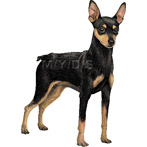 Miniature Pinscher clipart #5, Download drawings