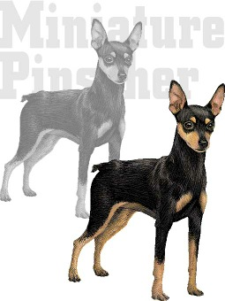Miniature Pinscher clipart #7, Download drawings