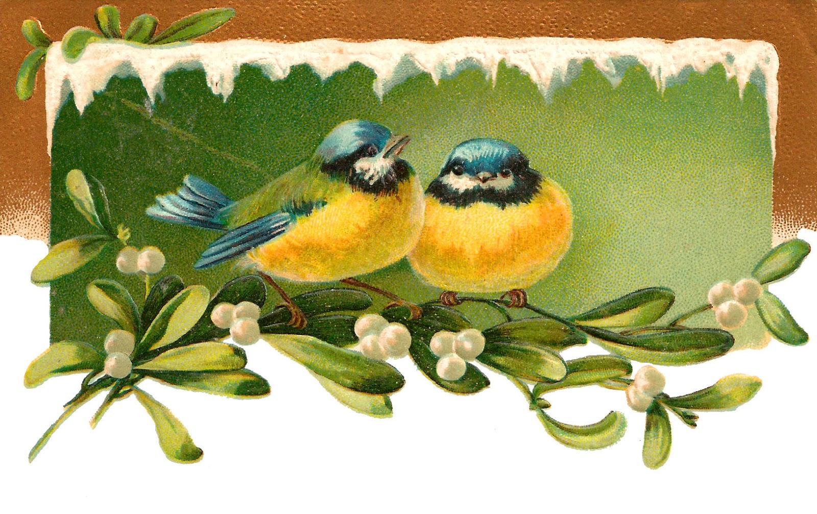 Mistletoe Bird clipart #15, Download drawings