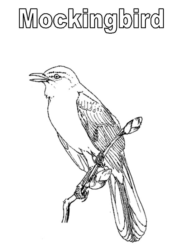 florida bird coloring pages   Mockingbird coloring, Download Mockingbird coloring for ...