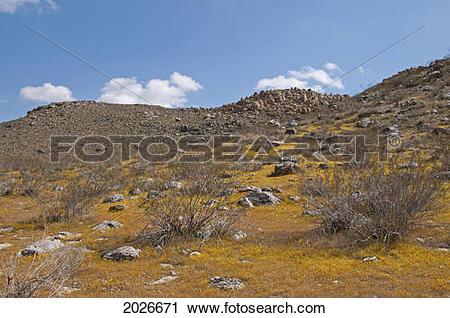 Mojave Desert clipart #10, Download drawings