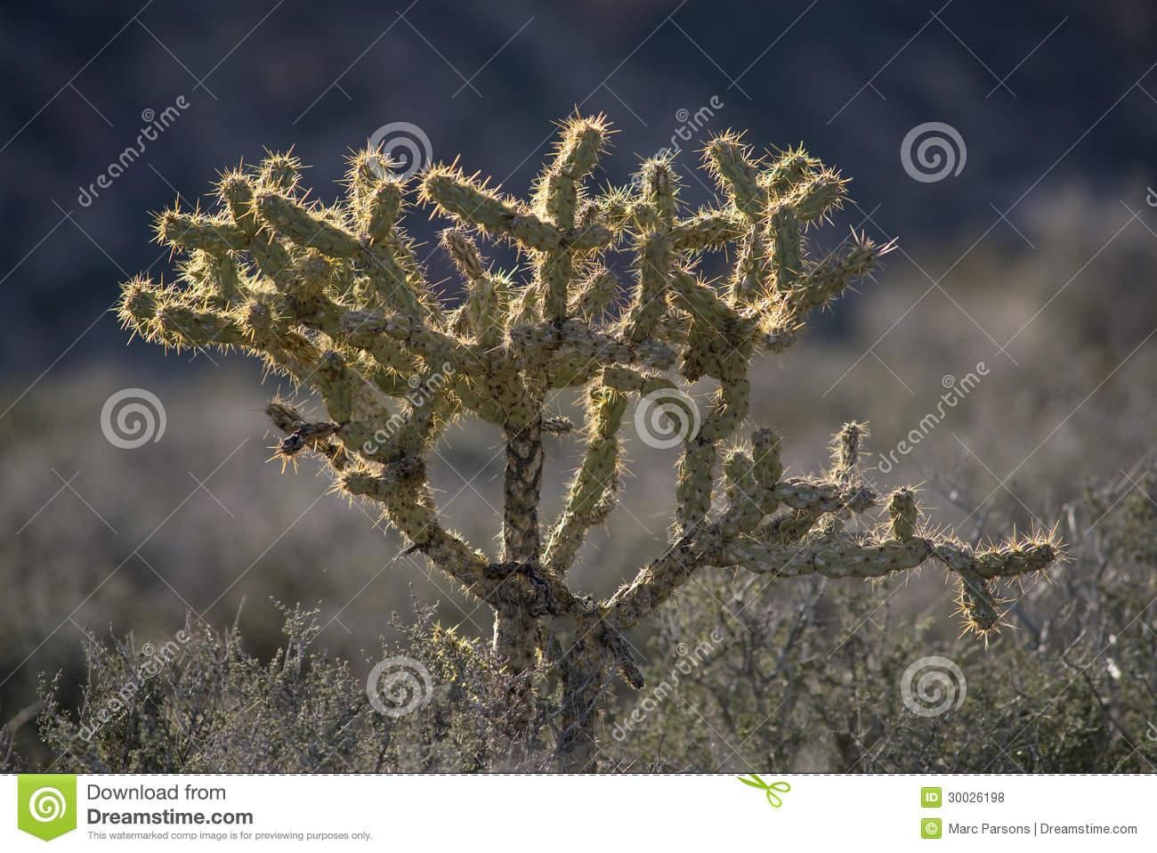 Mojave Desert clipart #6, Download drawings