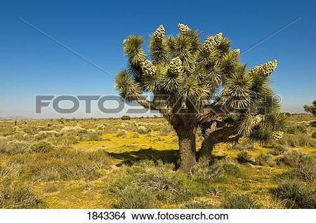 Mojave Desert clipart #15, Download drawings
