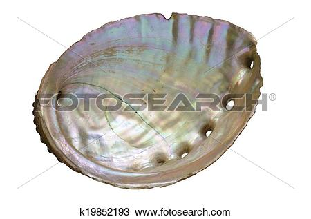 Mollusc clipart #4, Download drawings