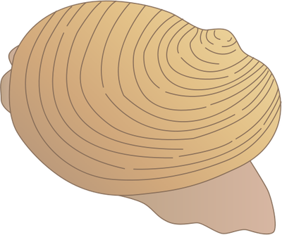 Mollusc svg #8, Download drawings