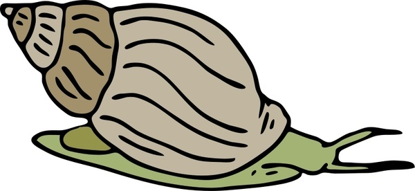 Mollusc svg #12, Download drawings