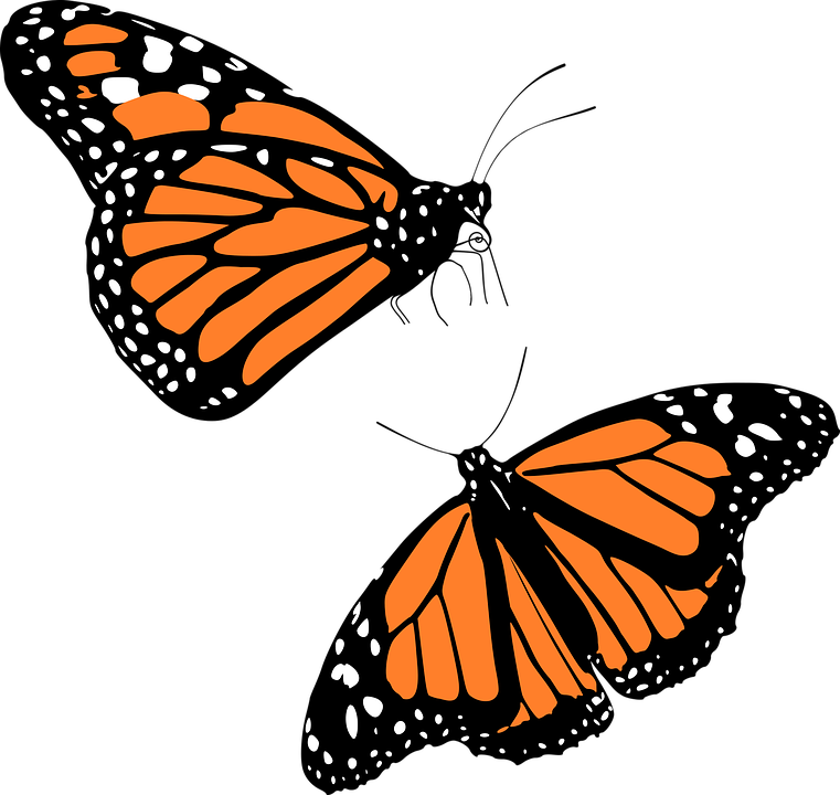 Monarch Butterfly clipart #9, Download drawings