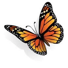 Monarch Butterfly clipart #16, Download drawings