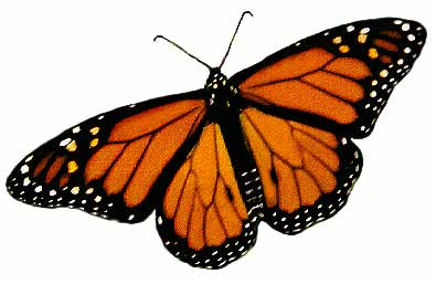 Monarch Butterfly clipart #10, Download drawings